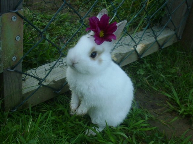 baby bunny with flower