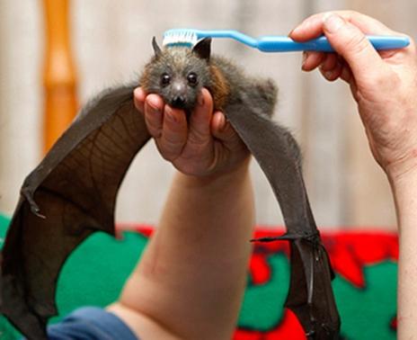 brushie brushie bat